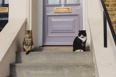 Dos gatos que se sientan en las espaldas encorvadas fuera de la casa Fotografía de archivo