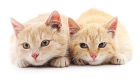 Dos gatos rojos Imagenes de archivo