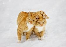 Dos gatos se acurrucaron el uno al otro al aire libre imágenes de archivo libres de regalías