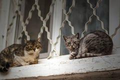 Dos gatos sin hogar se sientan en el travesaño blanco de la ventana foto de archivo libre de regalías