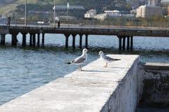 Dos gaviotas en un muelle del mar Imagen de archivo libre de regalías