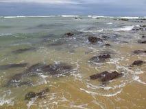 DOS Golfinhos - plage de natal, le Rio Grande do Norte, côte du nord-est de plage et de Baia de Pipa du Brésil photo stock