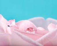 Dos gotas de lluvia en los pétalos color de rosa Fotos de archivo