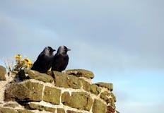 Dos grajos en el castillo de Conwy Foto de archivo