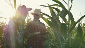 Dos granjeros hombre y mujer en un campo de maíz con una tableta en la puesta del sol La discusión de la cosecha almacen de video