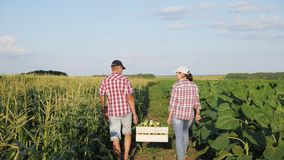 Dos granjeros llevan maíz en una caja de madera almacen de metraje de vídeo