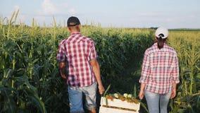 Dos granjeros llevan maíz en una caja de madera almacen de video