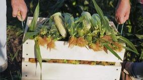 Dos granjeros llevan maíz en una caja de madera metrajes