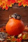 Dos hámsteres en paisaje del otoño Imágenes de archivo libres de regalías