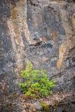Dos hermana Spruce Trees - hacer frente a adversidad fotos de archivo