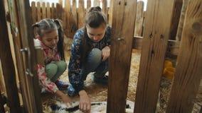 Dos hermanas en el zoo-granja que se sentaba en sus caderas y frotaron ligeramente los conejos el dormir almacen de metraje de vídeo
