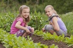 Dos hermanas que trabajan en el jardín vegetal Imagen de archivo libre de regalías