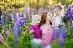 Dos hermanas y su madre en campo del lupine Imágenes de archivo libres de regalías