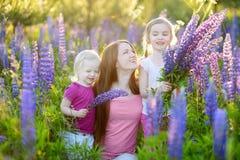 Dos hermanas y su madre en campo del lupine Imagen de archivo libre de regalías