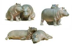 Dos hipopótamos del bebé, aislados en blanco Foto de archivo libre de regalías