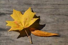 Dos hojas amarillas de la caída Imagen de archivo libre de regalías