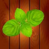 Dos hojas de la albahaca stock de ilustración
