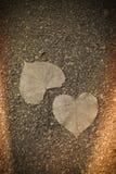 Dos hojas de la forma del corazón en otoño Fotos de archivo