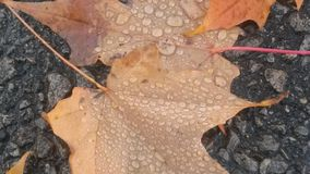 Dos hojas solas imagen de archivo