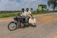 Dos hombres en la moto que transporta los pollos, Mellahalli la India Foto de archivo