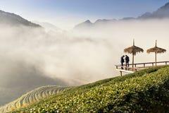 Dos hombres en la plantación de té Imagenes de archivo