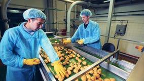 Dos hombres en workwear están procesando los tubérculos de la patata almacen de metraje de vídeo