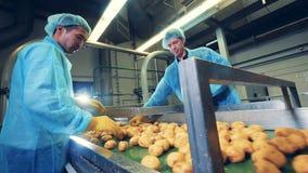 Dos hombres trabajan en una planta de comida, cortando las patatas limpiadas almacen de video