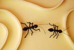 Dos hormigas Imagen de archivo libre de regalías