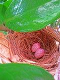 Dos huevos Foto de archivo