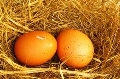 Dos huevos de oro Imagen de archivo libre de regalías