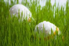 Dos huevos de Pascua en hierba con gotas del agua Fotos de archivo
