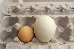 Dos huevos free-range Foto de archivo