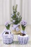 Dos jacintos vistieron caliente para el invierno habían puesto una bufanda en el Chr fotos de archivo libres de regalías
