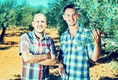 Dos jardineros de los hombres que se unen entre los olivos foto de archivo