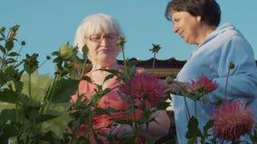 Dos jardineros mayores de sexo femenino que miran las flores rosadas hermosas almacen de video