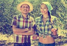 Dos jardineros que se unen entre los olivos foto de archivo