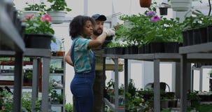 Dos jardineros que seleccionan alm?cigos en invernadero