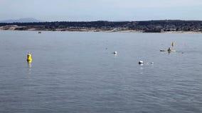 Dos kajaks que entran en el marco en la bahía California de Monterey almacen de metraje de vídeo