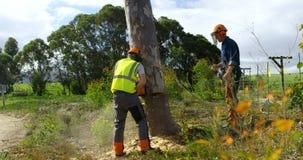 Dos leñadores que cortan el árbol caido en el bosque 4k almacen de video