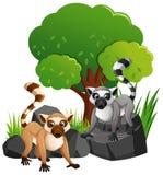 Dos lemures lindos en rocas stock de ilustración