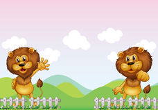 Dos leones Imágenes de archivo libres de regalías