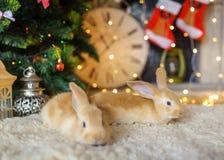 Dos liebres mullidas debajo de un árbol del Año Nuevo Foto de archivo