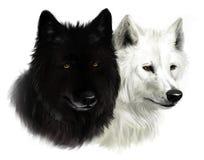 Dos lobos Fotografía de archivo libre de regalías