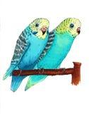 Dos loros azules Imágenes de archivo libres de regalías