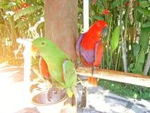 Dos loros en el parque por el alimentador en una isla tropical imágenes de archivo libres de regalías