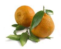 Dos mandarinas Fotografía de archivo libre de regalías