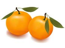 Dos mandarinas con las hojas. Fotografía de archivo