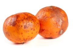 Dos mandarinas dañadas aisladas en el fondo blanco Fotos de archivo