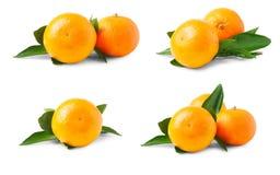 Dos mandarinas maduras con las hojas aisladas en el fondo blanco Sistema o colección Fotos de archivo