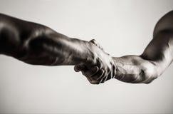 Dos manos, brazo, mano amiga de un amigo Apretón de manos, brazos Apretón de manos amistoso, saludo de los amigos Trabajo en equi imágenes de archivo libres de regalías